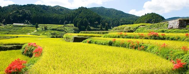 富士の田園